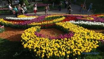 Топ-10 цветов для клумбы